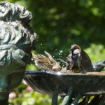 bird-bath-time