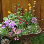 wheel_barrow_planter