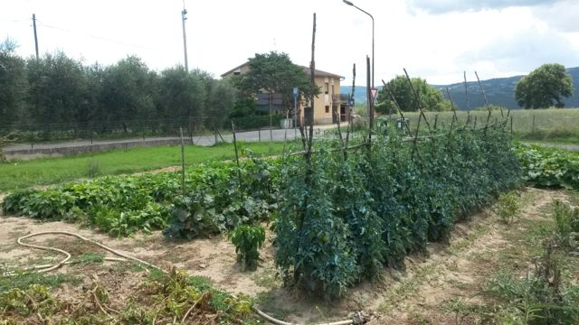 Growing vegetables in Sandy Soil