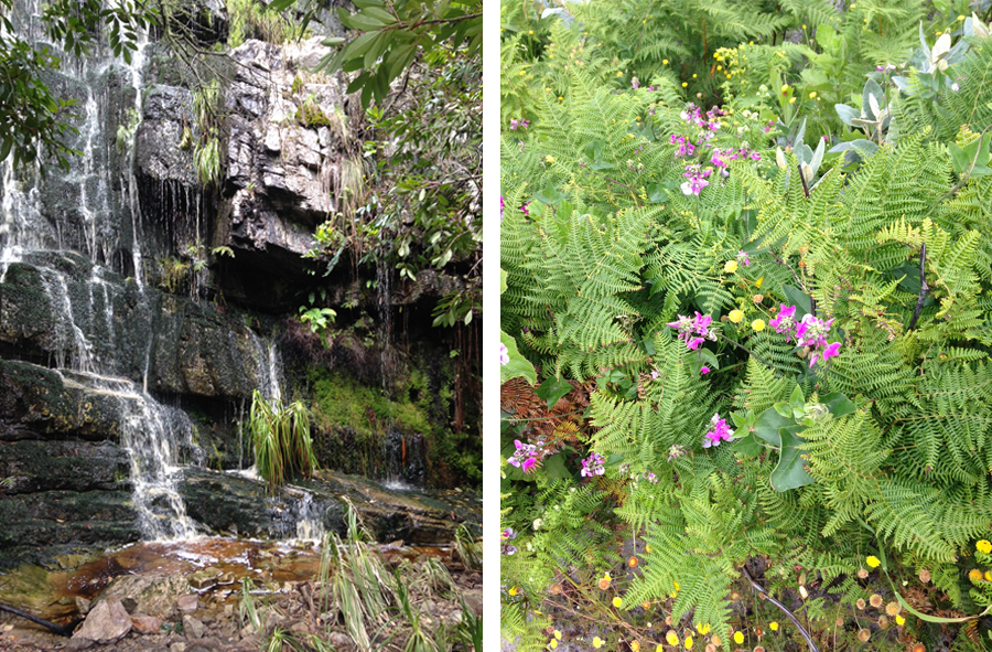 South Peninsula Walks: Silvermine Waterfall